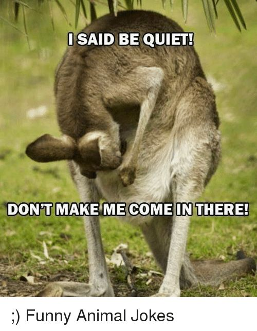 Animals Anime and Funny I SAID BE QUIET DONT MAKE ME E