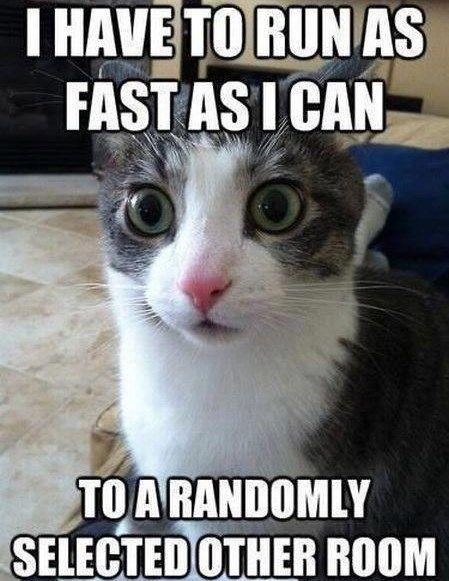 Cat meme about running really fast into another room for no reason