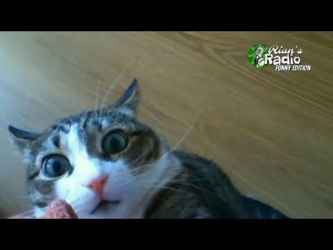 Kompilasi Kucing Lucu Part 1 Funny Funniest Cat Video