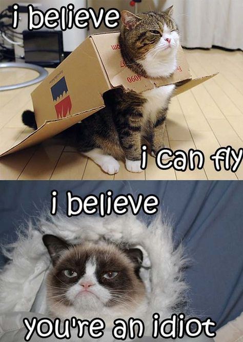 She is always grumpy always fed up of everything that s why we love her here are some funniest Grumpy cat memes