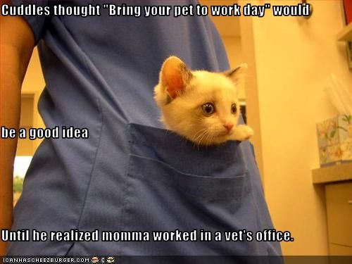Funny Vet Tech Quotes QuotesGram
