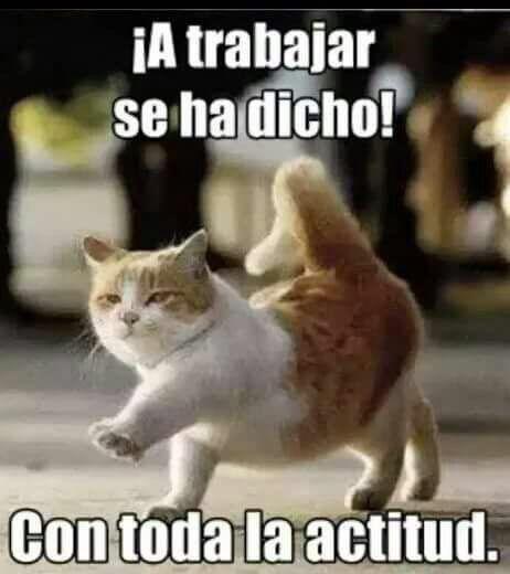 Kitty School Memes Paul Newman Cat Lovers Chibi Funny Cats Cute Cats Jokes Humorous Animals