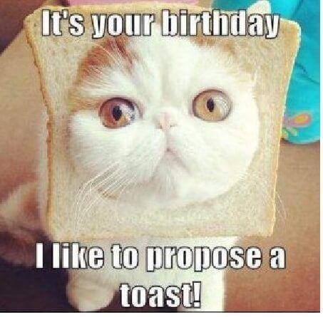 Happy Birthday Memes funny & Cute cat