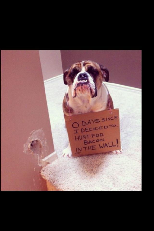 Humor Animal Funny Funny Dog Dog s