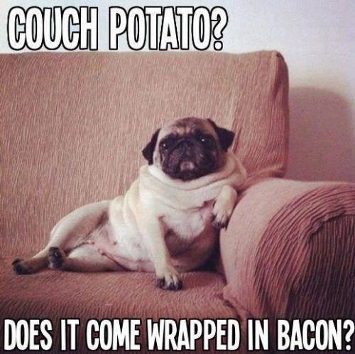 Filed Under Pug Meme Tagged With Funny Funny Pugs Meme Pug Pug Meme Pugs