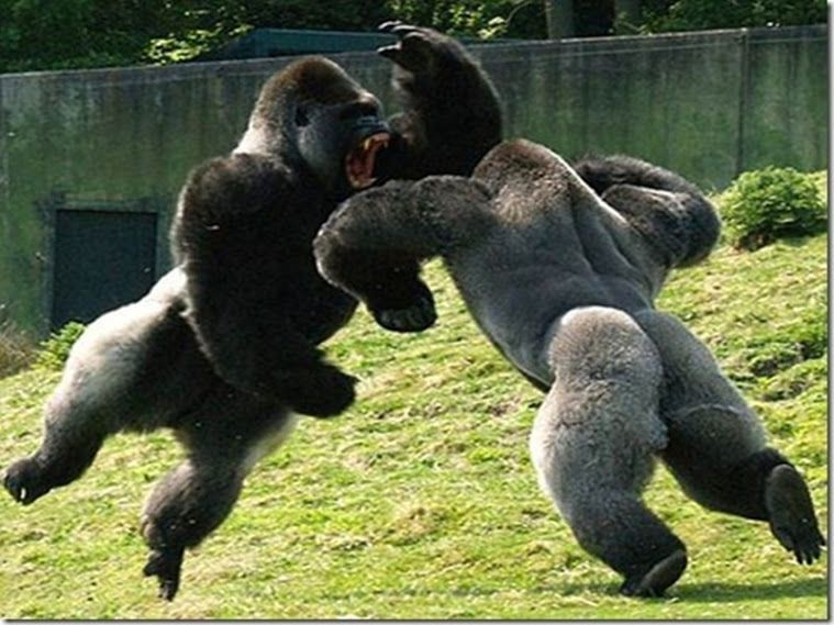 20 Perfectly Timed s of Animals Fighting naturesis