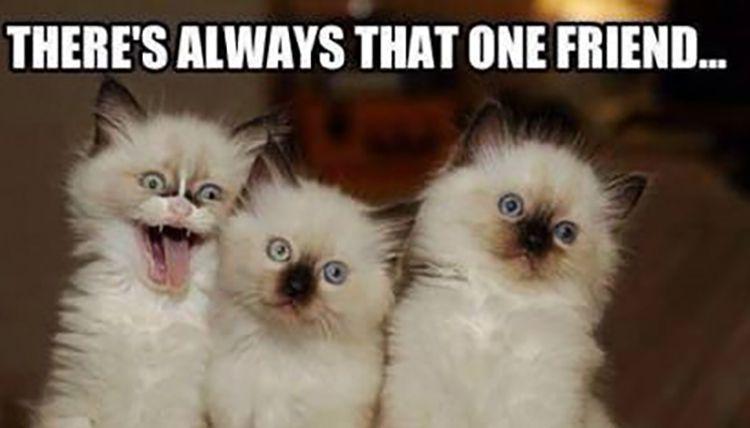 Kooky cat friendship meme