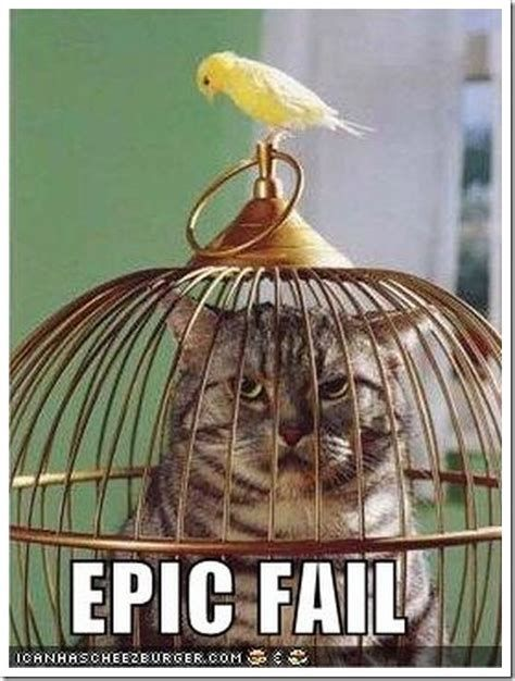 Funny cat pictures with captions with guns with quotes 470x621 Epic fail cat and gun