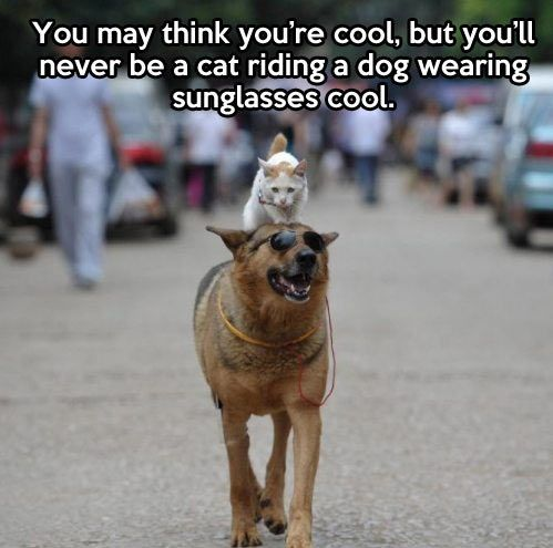 Well at least now I know I will never be that cool I can stop trying now cat and dog friendship