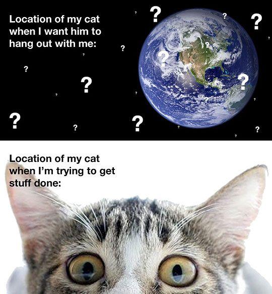 Location of my cat