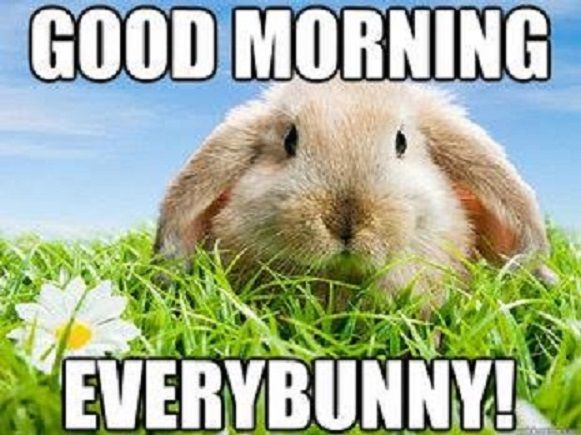 d3e8463d404b ddb9 bunny rabbits good morning