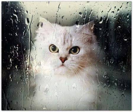 Rain rain go away Gotta love a grumpy cat