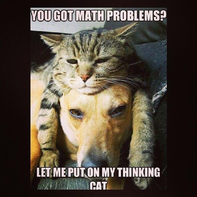 mathjoke haha humor joke math mathmeme meme problems cat thinking dog