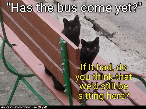 bus Cats caption here e has sitting still