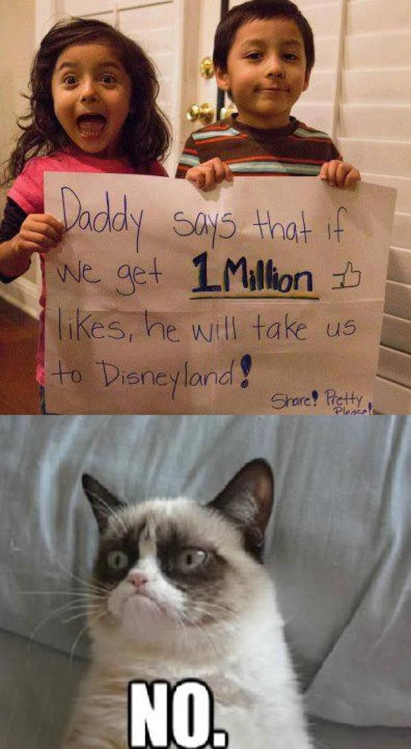 Grumpy Cat grumpy cat says no to disney world