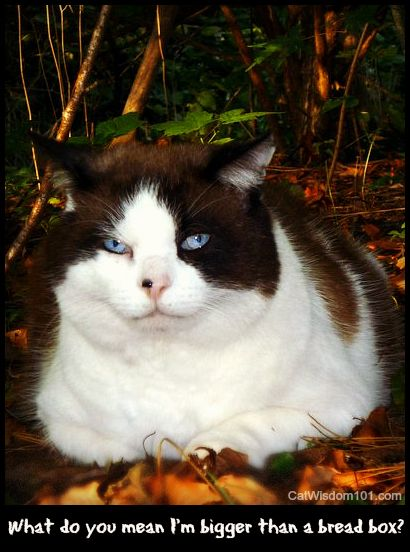 domino former feral cat day quote breadbox