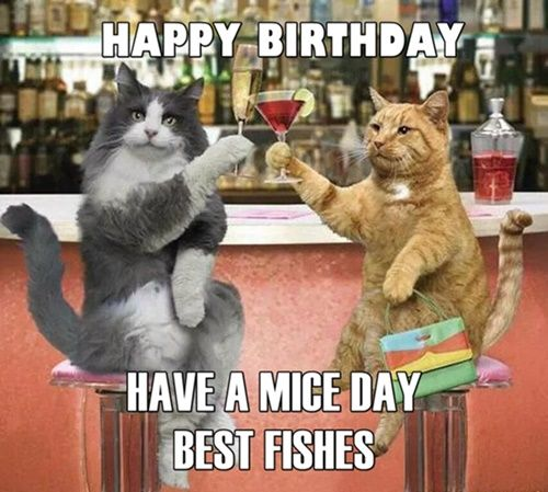 Get the Inspirational Happy Birthday Funny Cat Memes