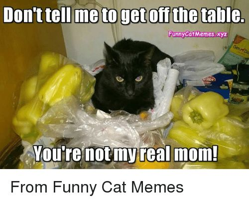 Cats Memes and Moms Dontteil meto off the table Funny CatMemes