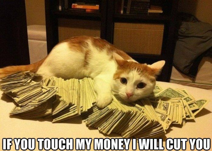 If You Touch My Money I Will Cut You Funny Cat Caption