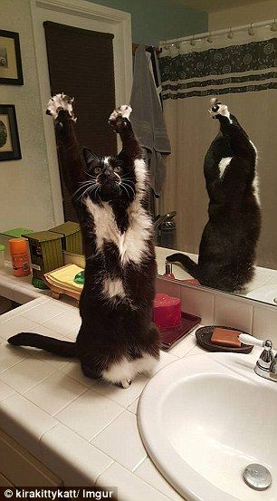 These images of the pet posing with its hands stretched above its head were posted on