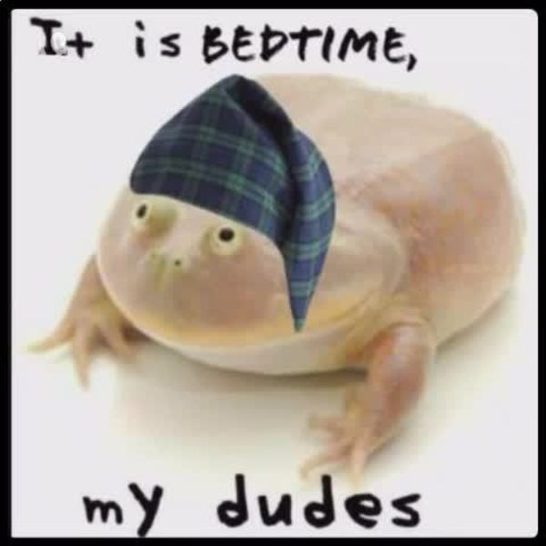 It Is Wednesday My Dudes It is bedtime my dudes