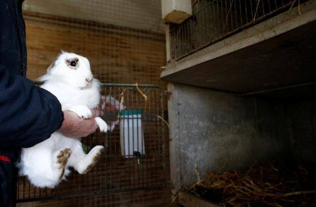 A woman holds a rabbit near in a hutch in Montbert France January 23