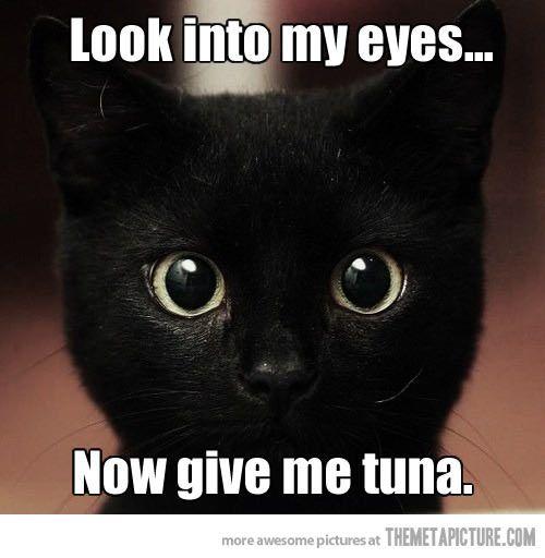 Black Cat Memes Funny Like Success