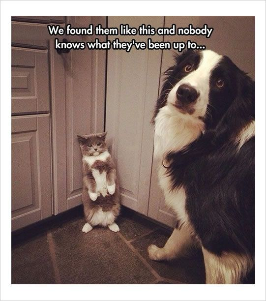 cat and dog up to something funny memes