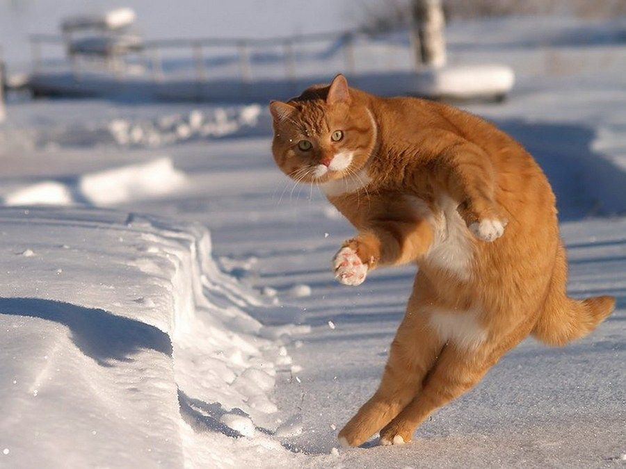 funny cats and snow redbarn pet products blog