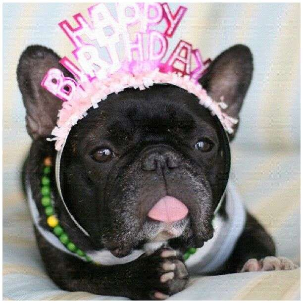 Glamorous Funny Dog Google S S Media Cache Ak0 Pinimg 736x 23 04 0d — Mad Fun