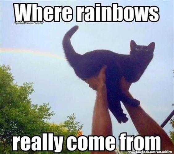Best 20 Cat Memes
