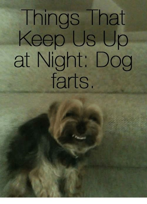 Dogs Memes and Ups Things That Keep Us Up at Night Dog farts