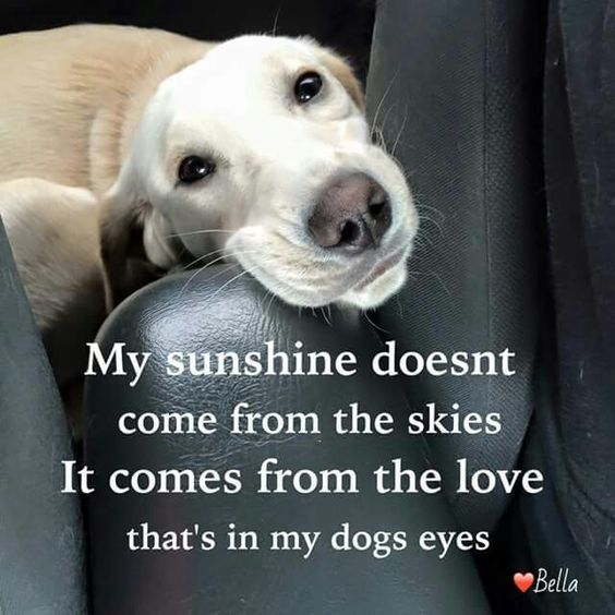 Dog Quotes ""