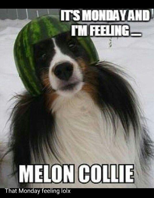 Mondays Animal Memes Animal Funnies Dog Funnies Animal Captions Pet Humor