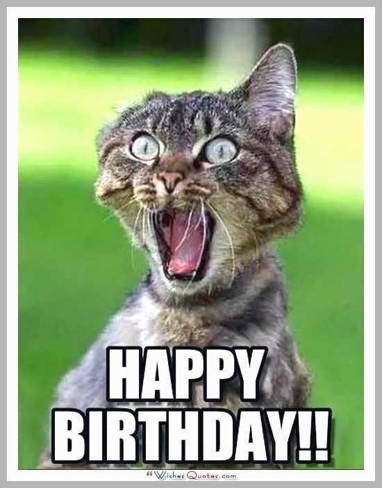 Happy Birthday Cat Meme Luxury Happy Birthday Memes with Funny Cats Dogs and Cute Animals