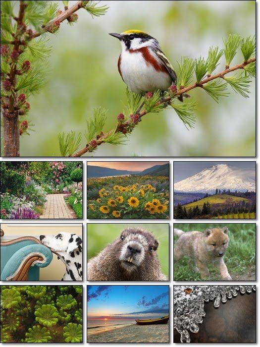 Wallpaper 2011 Desktop Hd Free HD WideScreen FREE HD WALLPAPER Frozen