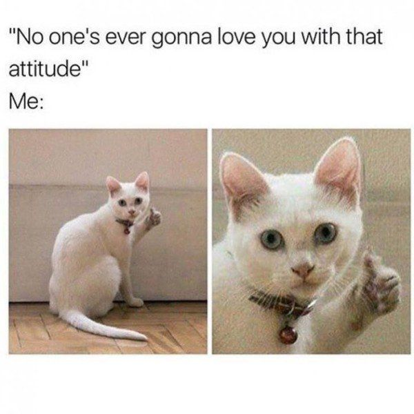 Thumbs Up Cat Meme