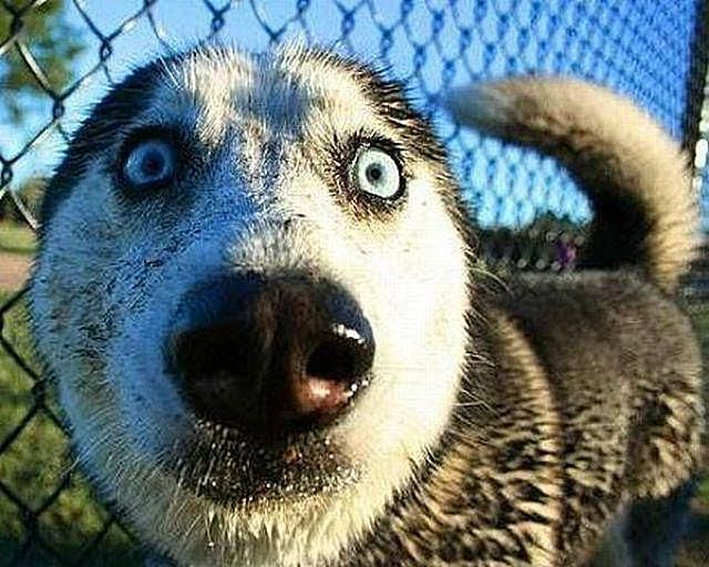 Animals Making Funny Faces