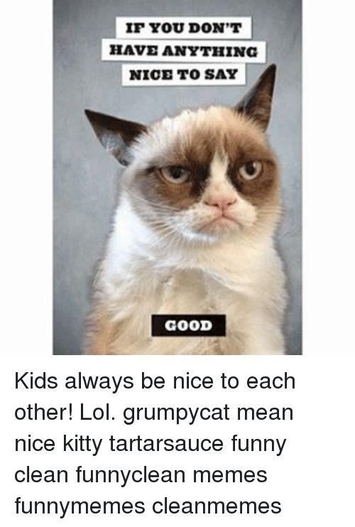 Get the Suprising Funny Cat Memes for Kids