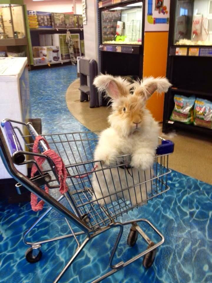 Super Adorable Bunny To Brighten Your Day This guy is looking for the aisle that has the most delicious snackies at the local pet store