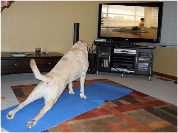 my DOG should do this yah my dog NOT me xDDDDD