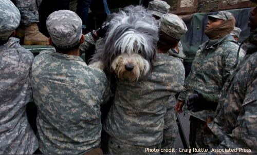 Post Hurricane Sandy Pet Care