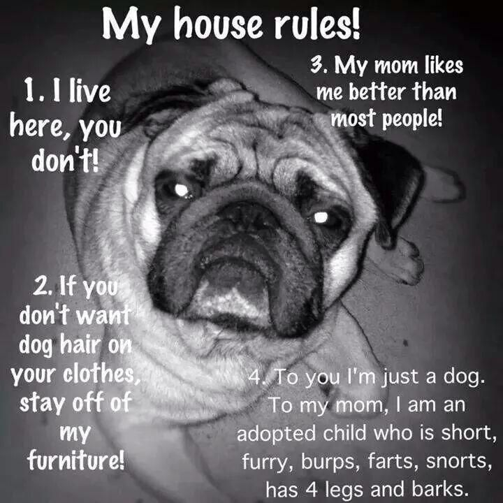 My pugs house rules Pug Art I Love Dogs Dog Cat