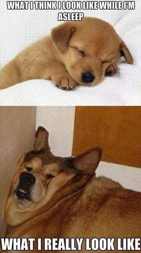 Dog memes While I m asleep