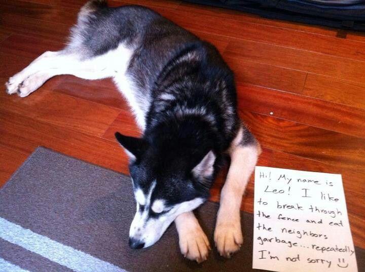 Dog shame dogs dogshamming weloveyourdog pawsatx