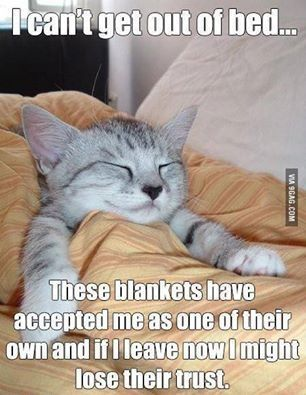 I Can t out of bed funny memes animals cats dog meme kitten funny quotes cute humor funny animals