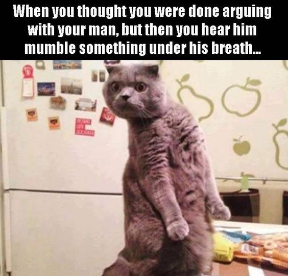 Get the Wonderful Funny Cat Memes Booby Trap