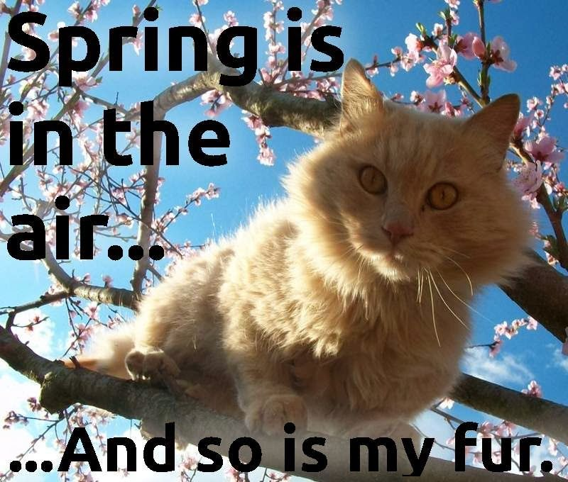 spring is in the air and so is my fur cat MEME