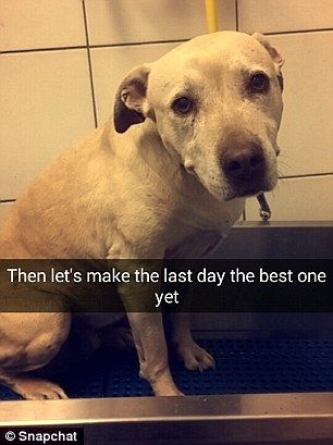 In making the dog s last day the best the owner first treats the dog to