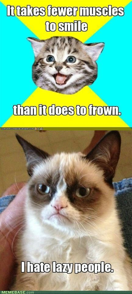 Explore Grumpy Cat Meme Grumpy Kitty and more